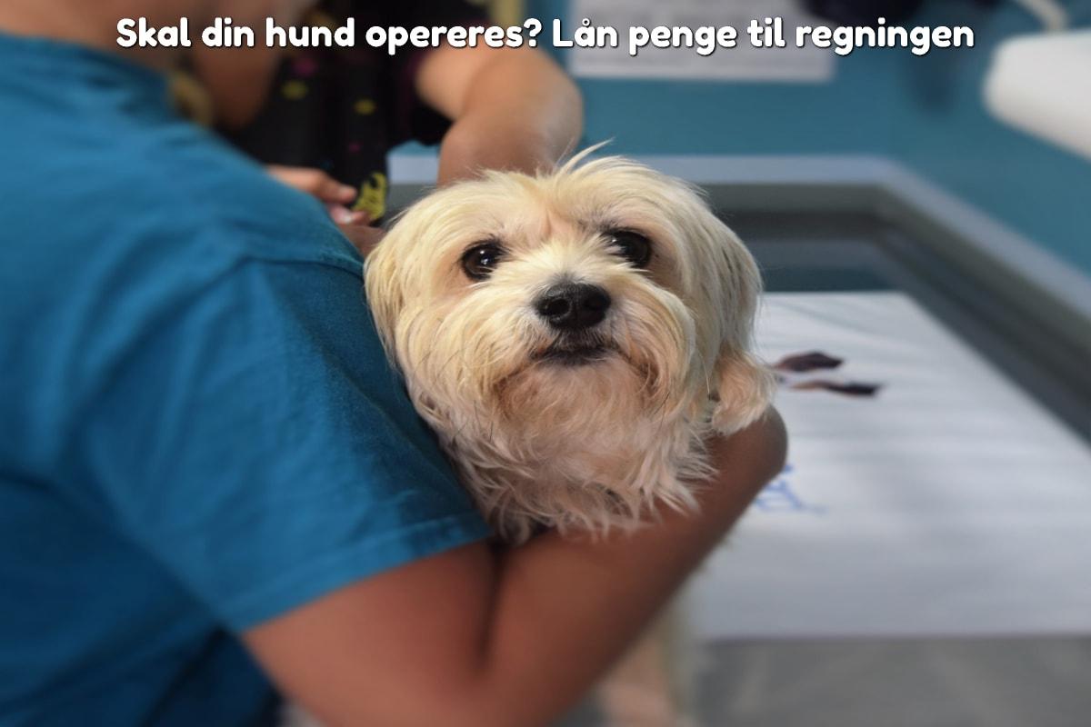 Skal din hund opereres? Lån penge til regningen