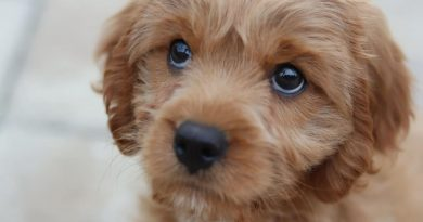 Har du overvejet at adoptere en hund?